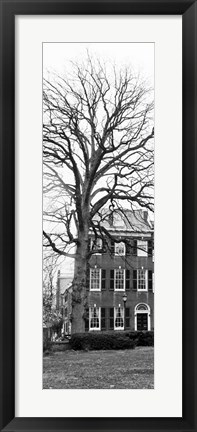 Framed Tree with House Print