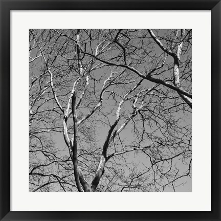 Framed January Branches II Print