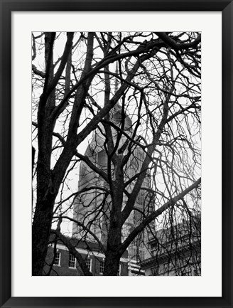 Framed Branch Curtain Print