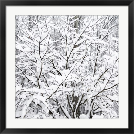 Framed Snow Filled Branches Print