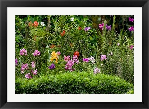 Framed Flower Bed, National Orchid Garden, Singapore Print