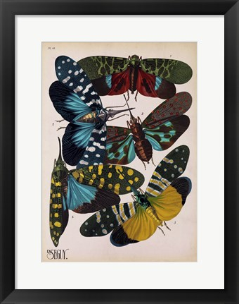 Framed Insects, Plate 8 Print