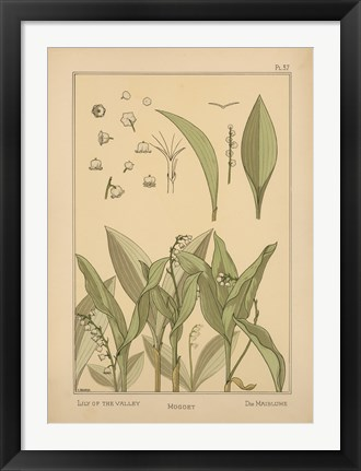 Framed Plate 37 - Lily of the Valley Print