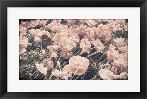 Framed Ginger Poppies Print