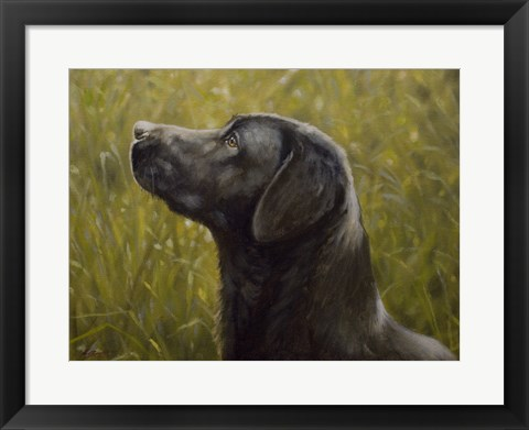 Framed Black Lab 15 Print