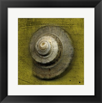 Framed Whelk Crown Print