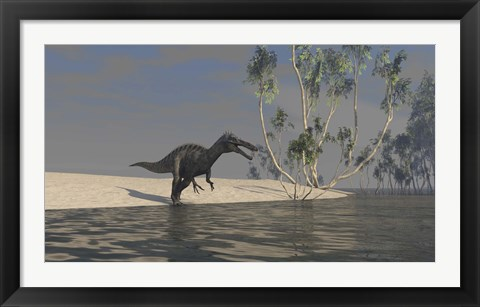 Framed Suchomimus Hunting for Food Print