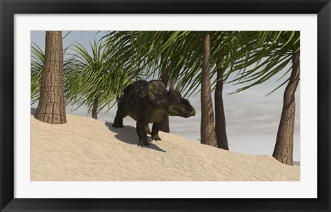 Framed Triceratops Walking in a Tropical Environment Print