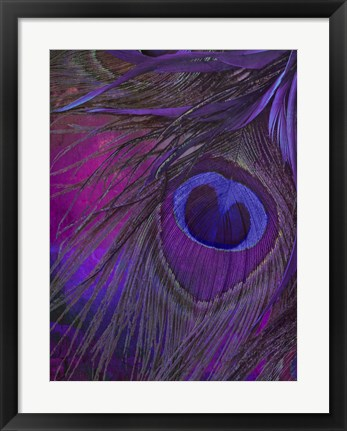 Framed Peacock Candy IV Print