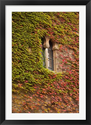 Framed Ivy-Covered Wall, Ciudad Monumental, Caceres, Spain Print