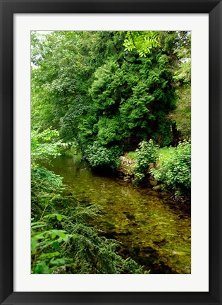 Framed England, Lake District, Cumbria, Flora Print