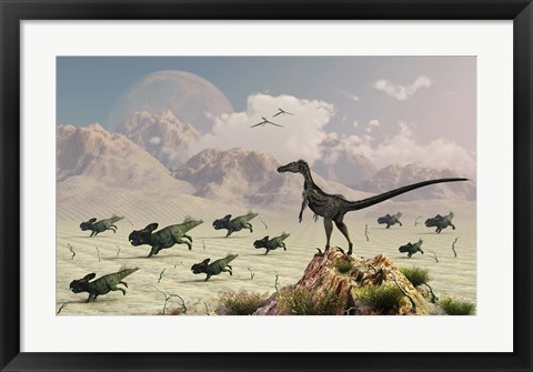Framed Protoceratops stampede in fear as a Velociraptor Watches Print