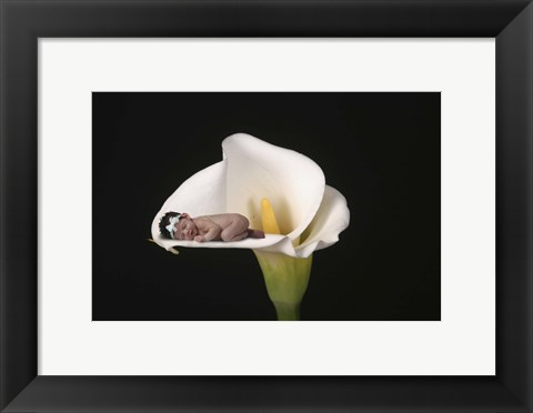 Framed Long Brooke Cala Lily Print