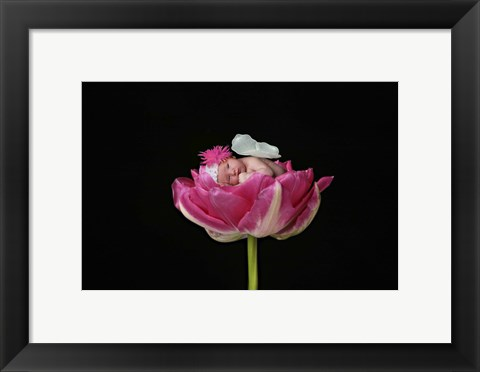 Framed Bauman Baby Butterfly On Flowers Print