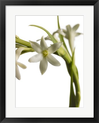 Framed White Flower 2 Print
