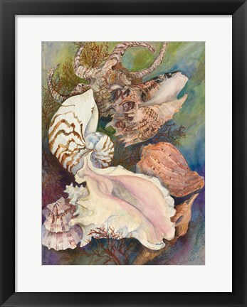 Framed Collected Shells Print