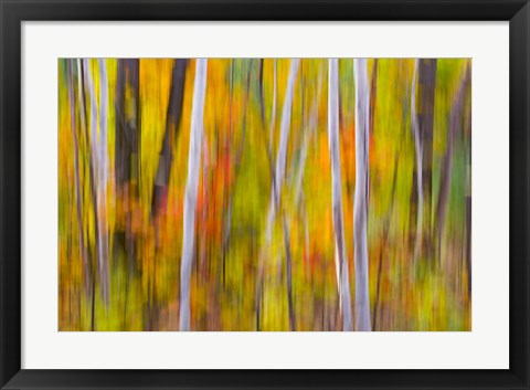 Framed Autumn Colors in Forest Print