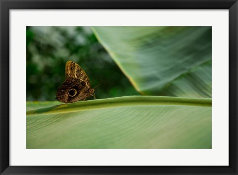 Framed Butterfly on a Leaf Print