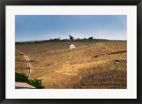 Framed Terraced Vineyards in the Cote Rotie District Print