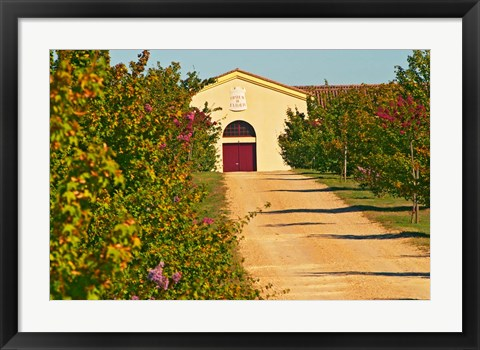 Framed Petit Verdot Vines and Winery Print