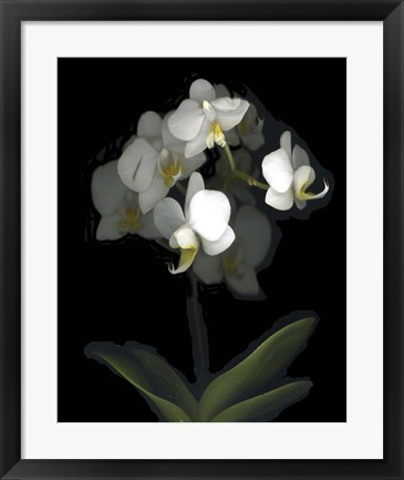 Framed Mini White Orchids Print