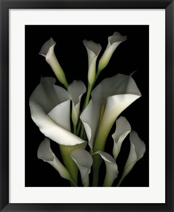 Framed White & Crystal Blue Callas 2 Print