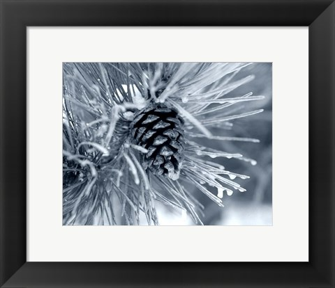 Framed Ice Pine Cone 2 Print