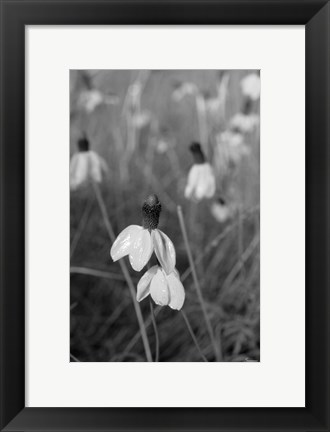 Framed Wildflowers 9 Print
