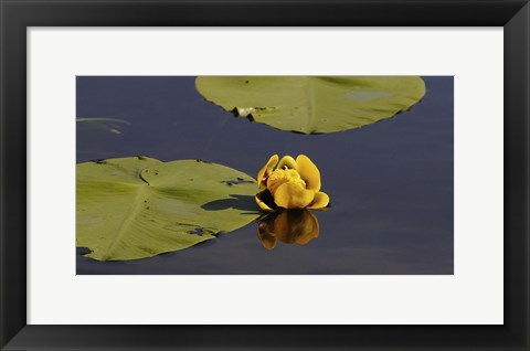 Framed Shades Of Nature Yellow Flower And Print