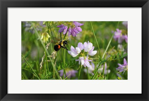 Framed Shades Of Nature Bee And Flowers I Print