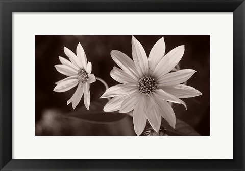 Framed Buffalo River Flower Duo Print