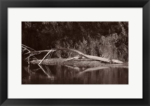 Framed Lake And Fallen Tree Reflection Print