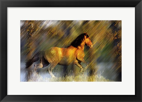 Framed Wild Horses in the Badlands II Print