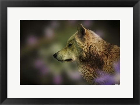 Framed Wolf Watching Orange Butterfly Print