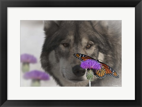 Framed Monarch and Wolf II Print