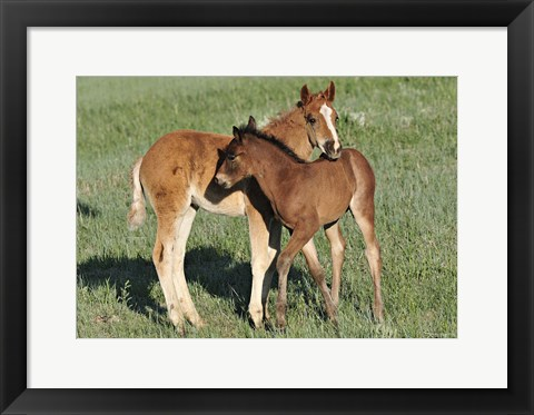 Framed Wildhorses 11 Print