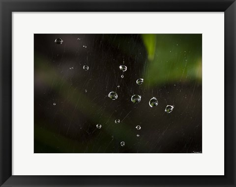 Framed Dew Drops On Web Print