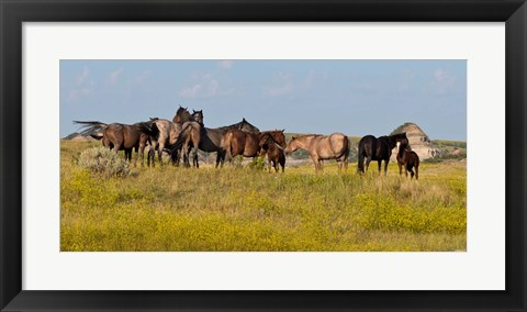 Framed Horses In Yellow Field Print