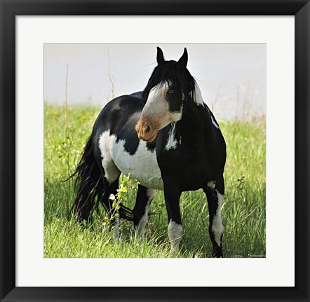 Framed Wildhorses 2 Print