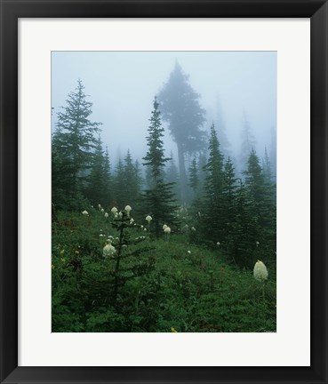Framed Misty Green Trees And Field II Print