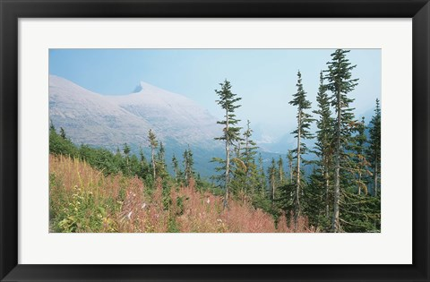 Framed Glacier National Park 17 Print