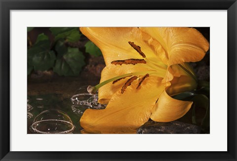Framed Yellow  And Red Flower And Bubbled Water Print