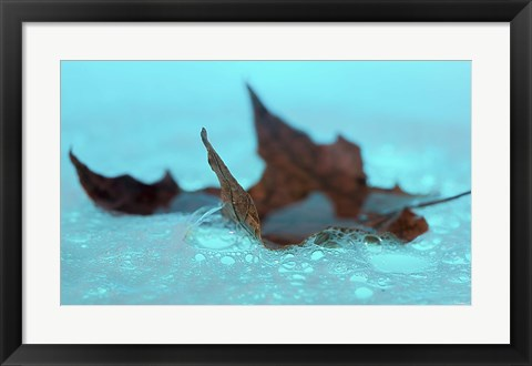 Framed Fall Leaf Floating In Blue Water Print