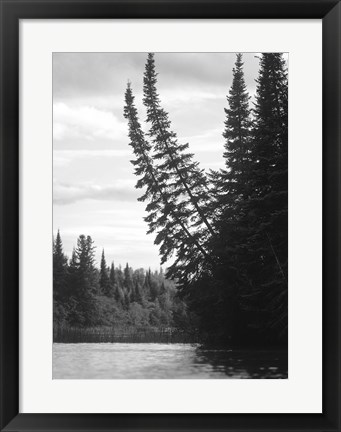 Framed Ash River 5 Print