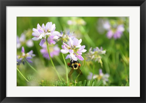 Framed Shades Of Nature Lavender And White Flower Print