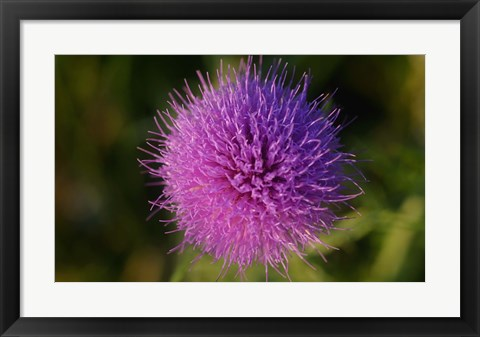 Framed Shades Of Nature Purple Spiked Flower I Print