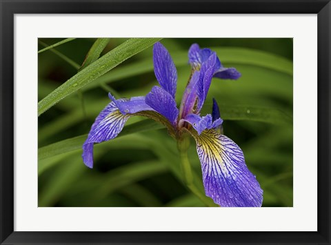 Framed North Shore Purple And Yellow Flower Print
