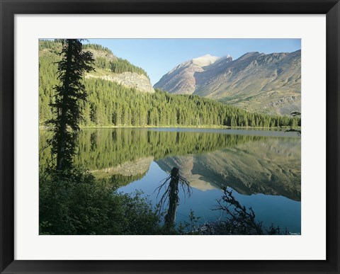 Framed River Reflecting Evergreens Print