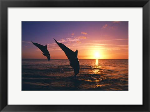 Framed Dolphin Sunset Dive Duo Print