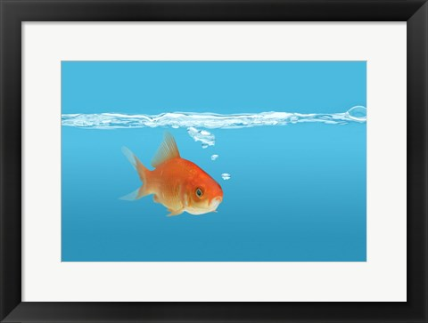 Framed Goldfish In Thought Print